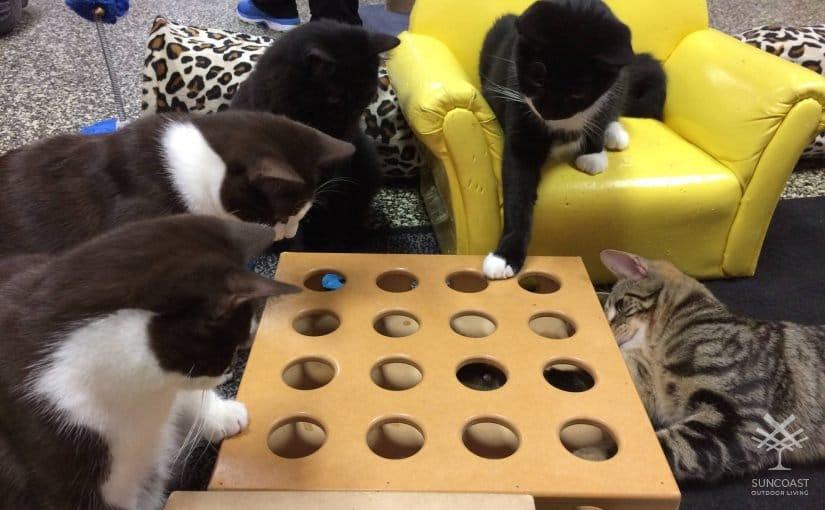 Cat Cuddle Cafe – A Pet Friendly Cafe