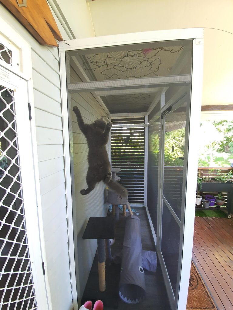 Cat enjoying screened pet enclosure