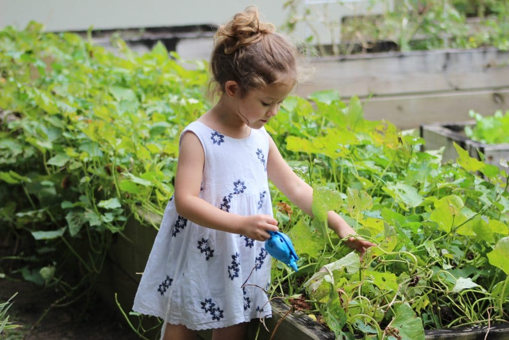 Grow and edible garden with your children